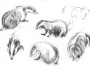 Badgers and woodmouse. Pencil. 2012