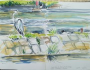 Heron on Lune Weir. Watercolour. 2014