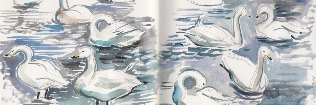 Whooper swans, Martin Mere (detail). Watercolour sketch. 2014.