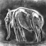 African elephant monotype