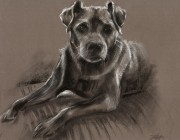 'Brandy'. Pastel and charcoal