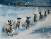 Snowy Sheep. Watercolour