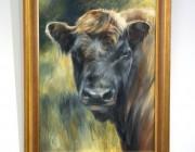 'Beltie Bull'. Oil on linen..
