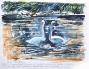 Two Swans. Watercolour. 29 x 21 cm.