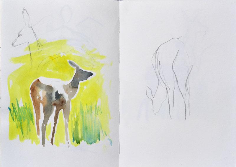 Red Deer, watercolour sketch
