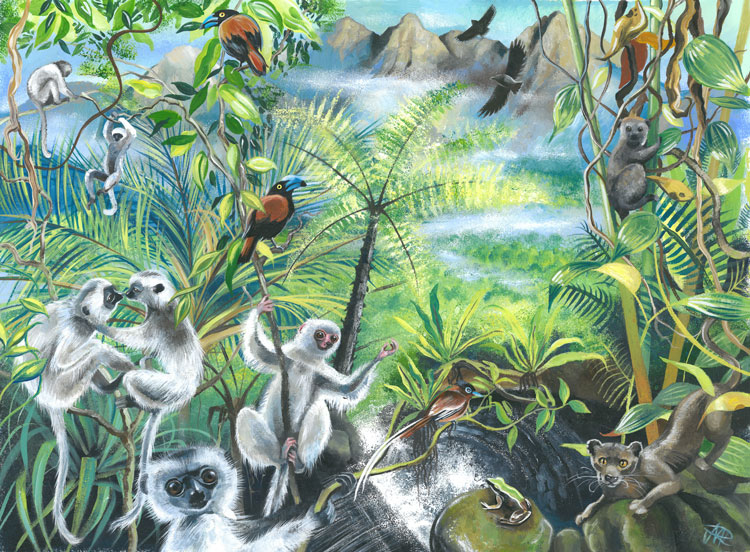 Marojejy National Park illustration