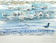 Gulls and crow at Marsh Point. Watercolour. 2013