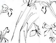 Irises, Ink