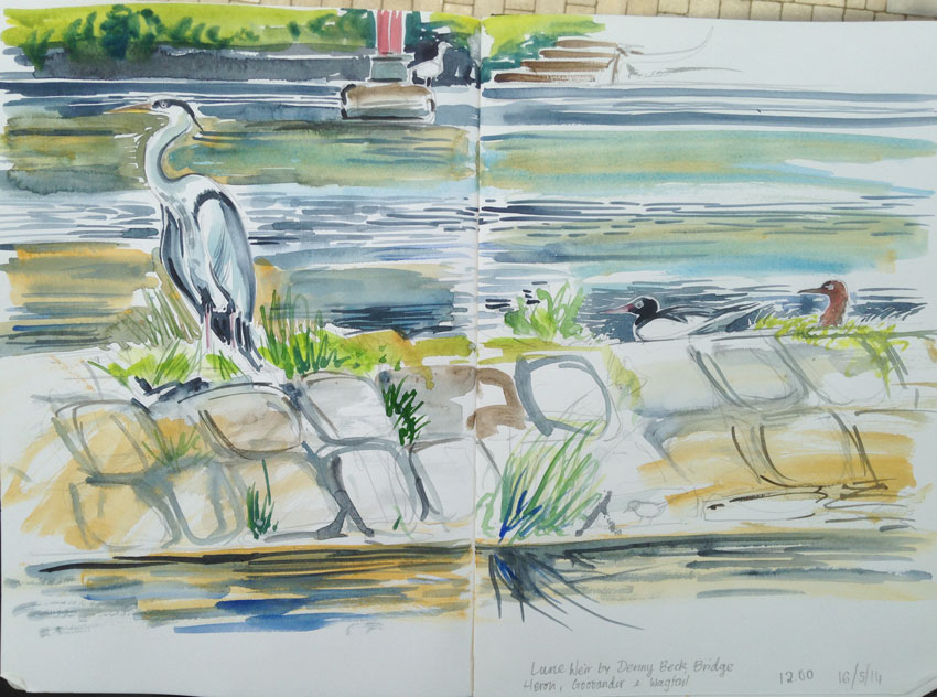 Heron on Lune Weir, Halton. Watercolour sketch