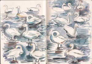 Whooper Swans, Martin Mere. Watercolour. 2014