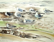Gulls at Marsh Point. Watercolour. 2013