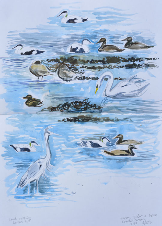 Eider, heron and swan at Conder Green. Watercolour sketch