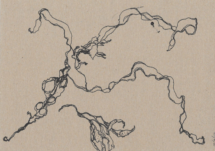 Ink drawings of seaweed