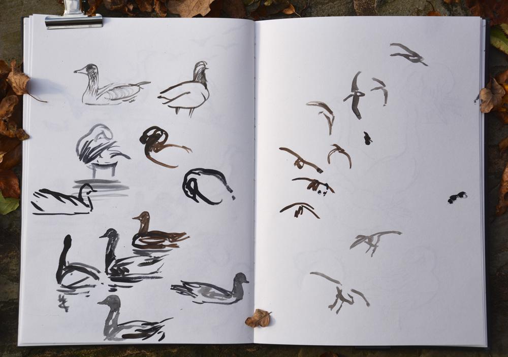 PInk footed geese landing