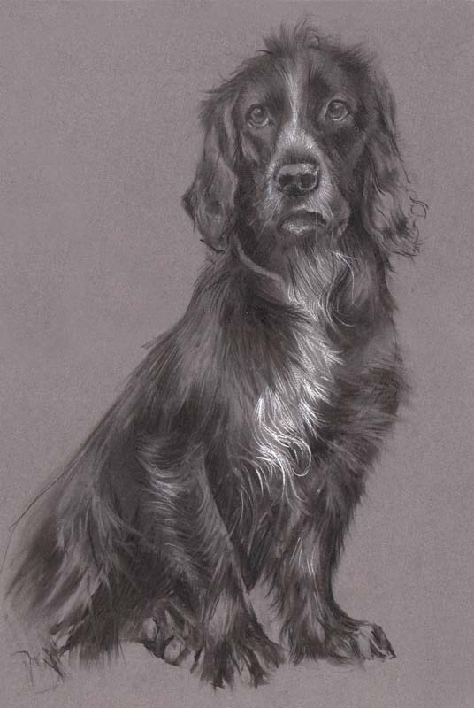 'Drew'. Charcoal and pastel.