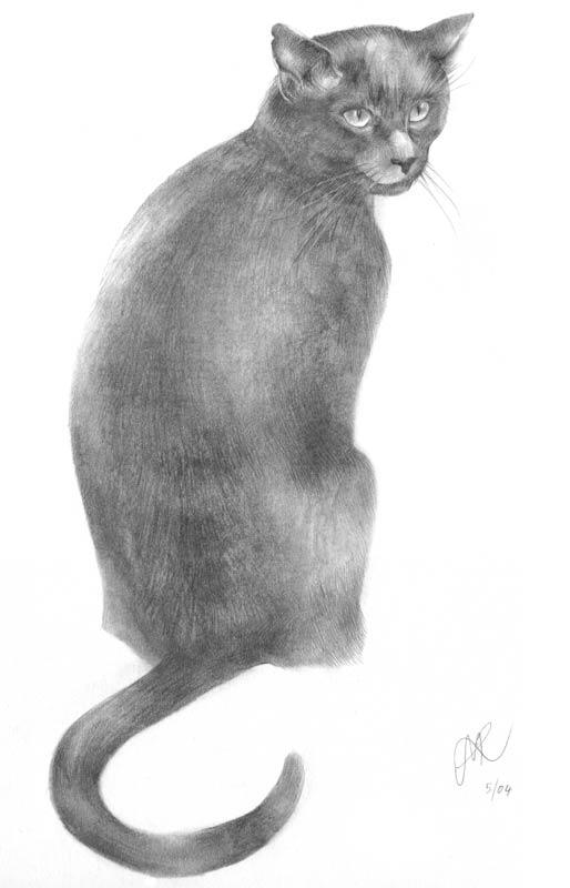 'Teddie'. Pencil