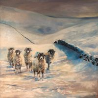 Sheep, Hawthornthwaite Fell, Oil