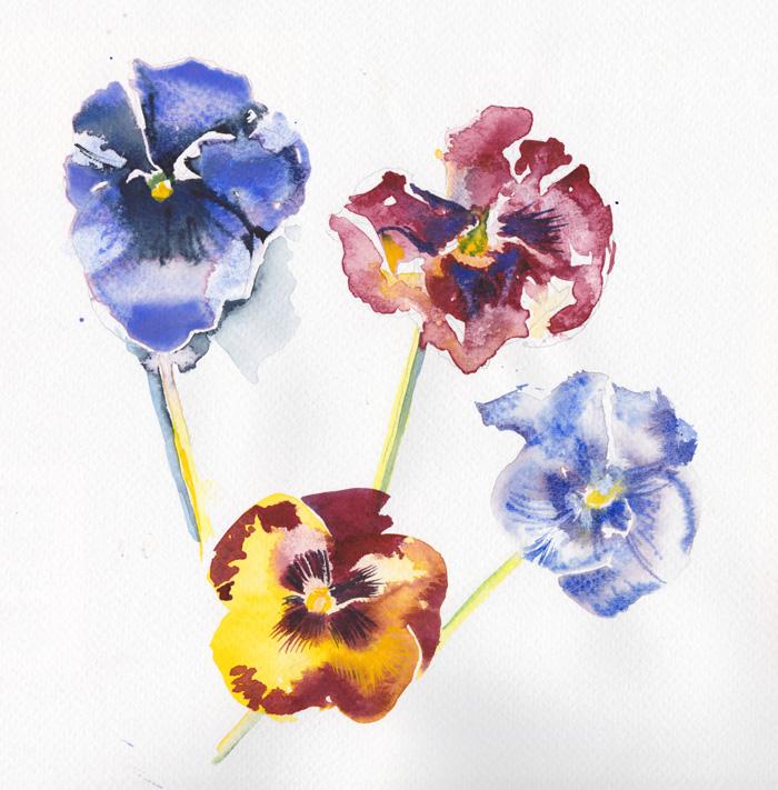 Four Pansies, watercolour