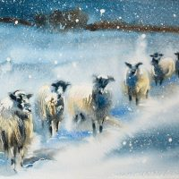 Snowy Sheep