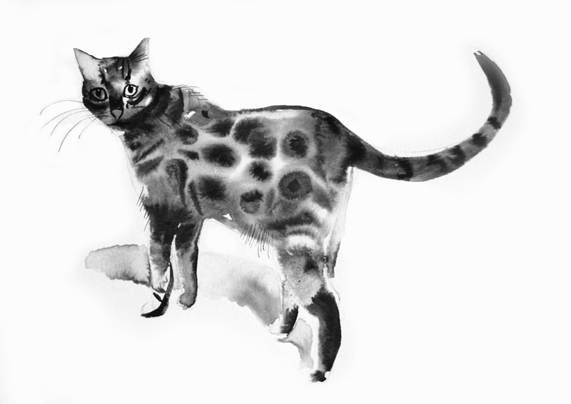 Bengal Cat, Indian Ink