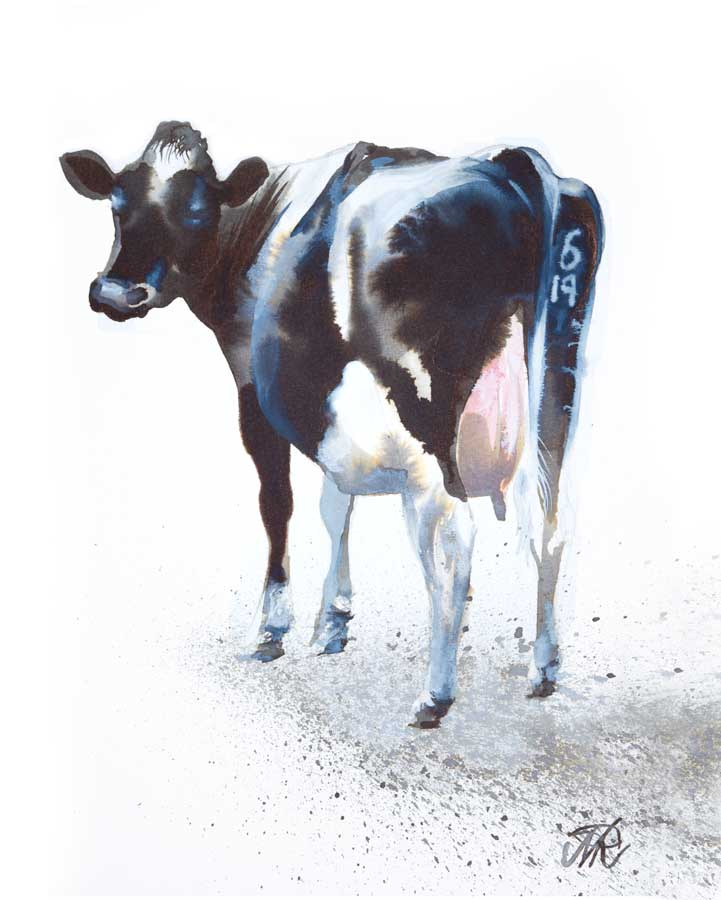 'Cow-619', Ink and watercolour.