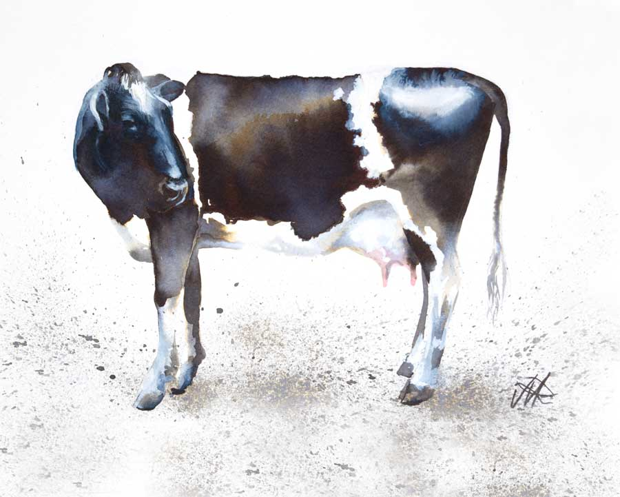 'Dairy Cow, Clevely House Farm', Ink and Watercolour