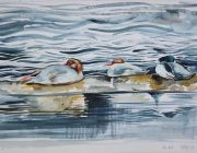 Mergansers. Watercolour. 29 x 21 cm
