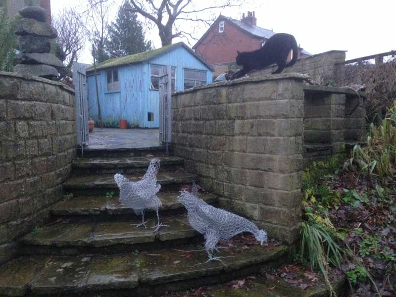 Fergus the cat upstaging the chickens
